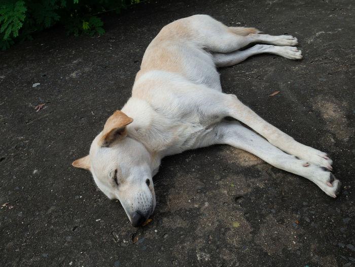 High angle view of dog lying on street