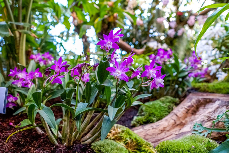 Flower Flowering Plant Plant Beauty In Nature Petal Close-up Vulnerability  Freshness Fragility Growth Flower Head Nature Day No People Outdoors Spring Summer Flowers Blossom Orchid Orchids Garden Beauty In Nature Floral Sea Of Flowers Exotic Botany Botanical Garden Colors Gardener Job Occupation Glasshouse Greenhouse Tropical Hobby Growth Nature Diversity World Flora Postcard Backgrounds