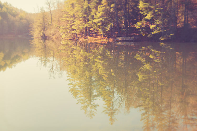 Hidden lake in the GA appalachian mountains Morning Autumn Beauty In Nature Change Day Forest Growth Lake Leaf Nature No People Outdoors Reflection Scenics Sky Standing Water Tranquil Scene Tranquility Tree Water