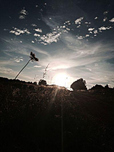 Walk on fields/sunset/feel free mind...