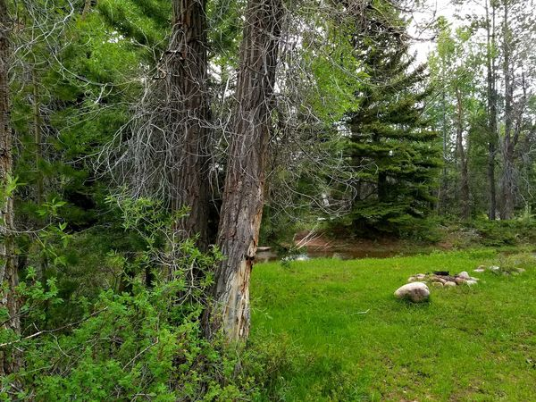 Wyoming Landscape Remote Places Mountains Uinta Wilderness Tree Grass Green Color Green Growing Woods