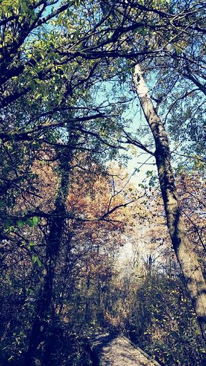 My crazy lovely forest Forest Nature Photography Trees Mystical CrazylightAutumn Collection Autumn Colors Autumnbeauty Naturelovers Wildlife & Nature Forestphotography EyeEm Nature Lover Foret Workoutgym Nature_collection