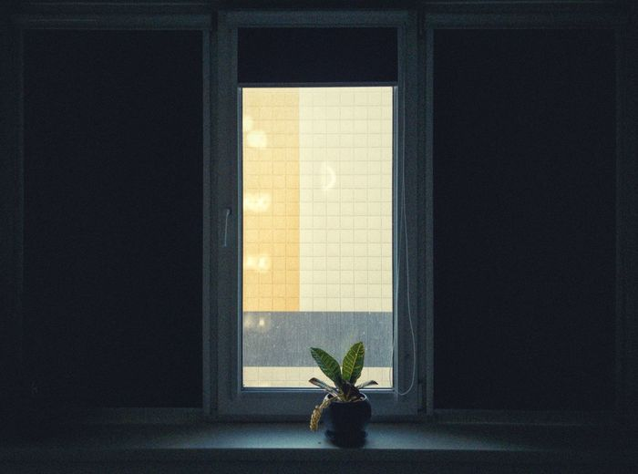 Window Architecture Indoors  Built Structure Plant No People Day Flower