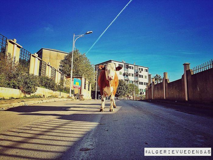 Algerievuedenbas No People City First Eyeem Photo