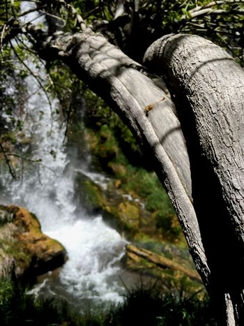 Rifle Falls State Park Check This Out Waterfalls TreePorn Colorado