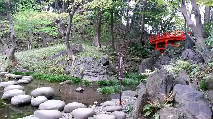 Outdoors Nature Growth Tree Parks And Garden Smartphonephotography Smartphone Photography Spring In Japan Japan Freshness Tokyo Trees Japanese Garden Cold Day In Spring Tranquility Tokyo Park Park - Man Made Space Park Stones In The Garden Bridge In The Background Bridge In The Nature