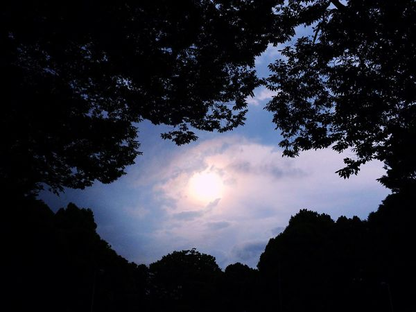Yoyogi Park Trees Nature Sunshine Sky Nature_collection Clouds And Sky Sky_collection EyeEm Nature Lover Sun