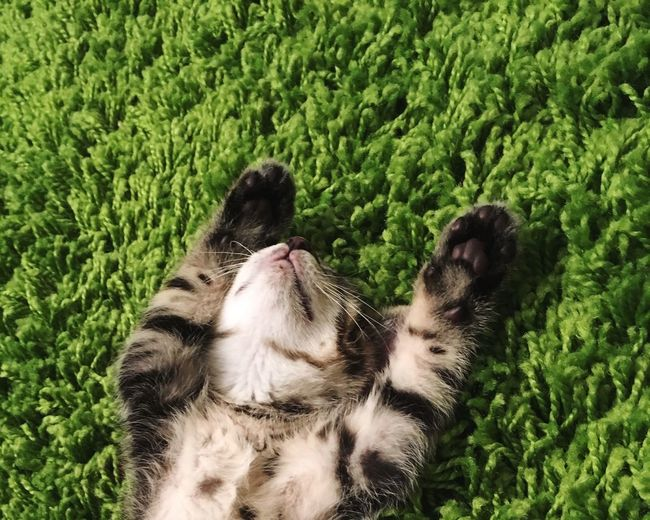 Close-up of cat relaxing on carpet