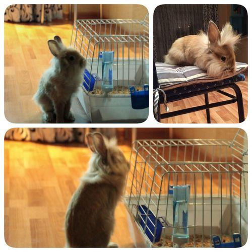 домашниелюбимцы кролик лева любимчик