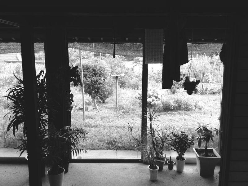 Garden ♡スムーズにいかない こまった Blackandwhite Plants