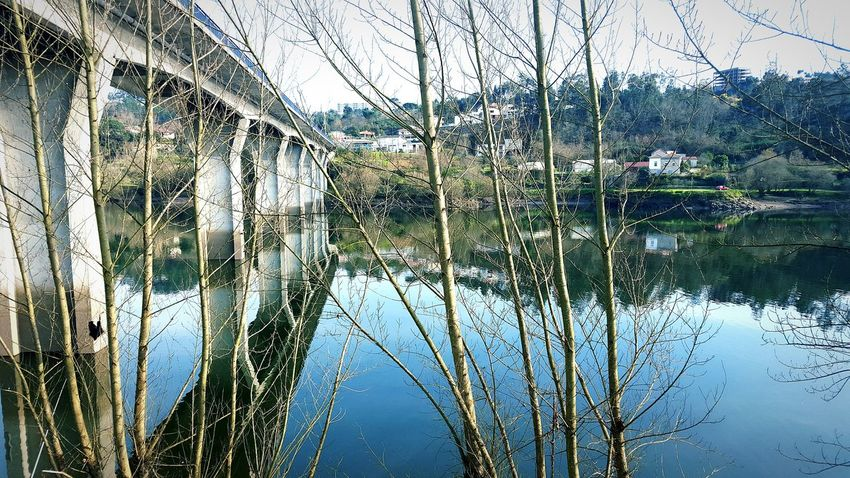 Plant Tree River Riverside Bridge Igersportugal Portugalcomefeitos Perspective Point Of View From My Point Of View Phonecamera My Side PhonePhotography EyeEm Editing Nature Naturelover Eyeemnaturelover Eyeemnature Loveit Trees Contrast Focus Nofocus  Showcase: February
