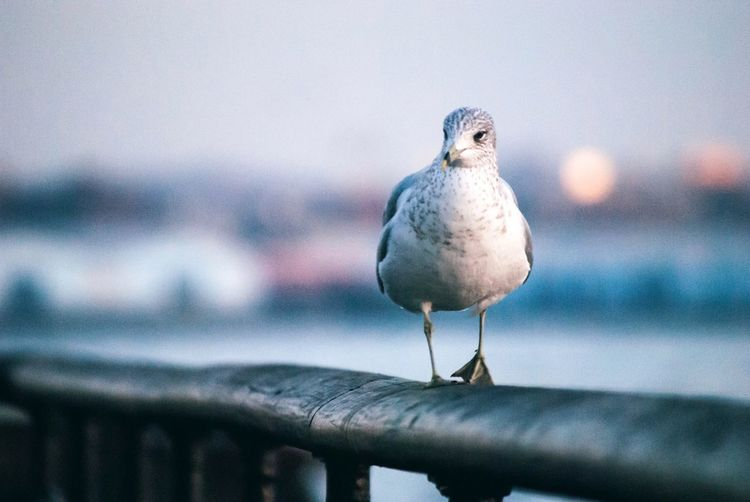 The beauty of animals EyeEm Selects Bird Vertebrate Animal Themes Animal Perching Animals In The Wild Animal Wildlife Nature Seagull Water