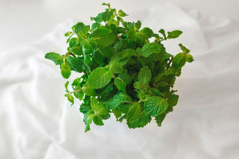 Papermint Mint Leaves Green Color Wellbeing Food Food And Drink Freshness Indoors  Plant Part Healthy Eating Mint Leaf - Culinary Nature High Angle View Herb Leaf