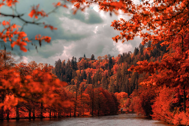 Scenic view of forest during autumn against sky