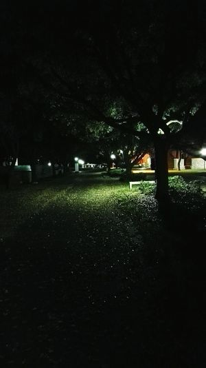 Campus Things Campus At Night Quiet Nights Long Walk Home Creepy But Cool Greenery Green Leaves They Look Like Stars Night Lights On The Way