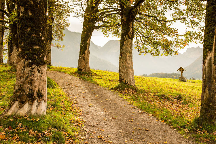 Maple trees in atumn with crucifix in Allgäu nearby Oberstdorf Allgäu Autumn Maple Trees Beauty In Nature Crucifix Day Fall Full Length Germany Hofmannsruh Landscape Lifestyles Mammal Nature Oberstdorf One Person Outdoors People Real People Scenics Sky Standing Tranquil Scene Tree Tree Trunk