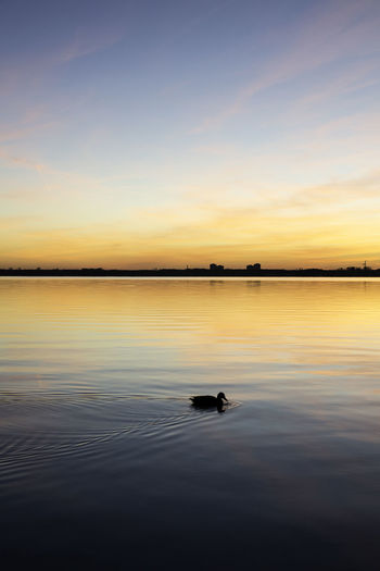 Silhouette duck swimming on lake against sky