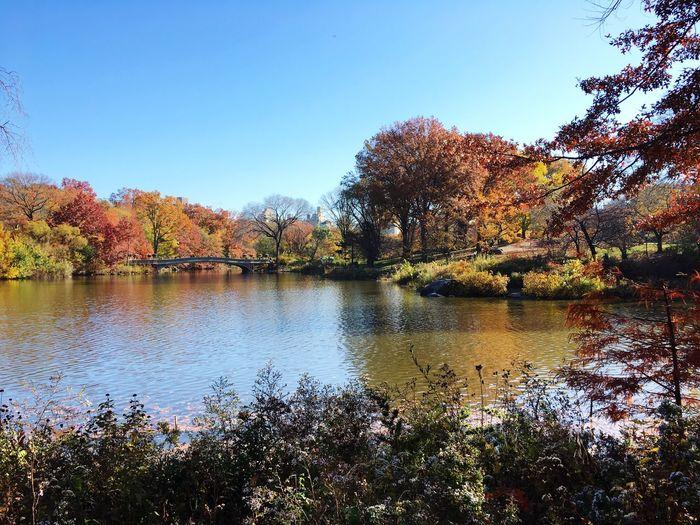 💞 Central Park