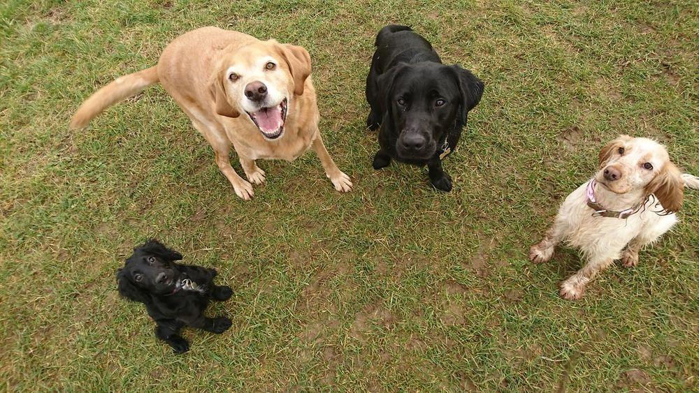 Canine Love :) Canine Photography Dog Photography Dog❤ Doglovers Dog Walking Dogsareawesome Dogs_of_instagram Dogs Of EyeEm Dog Love DogLove Dogslife