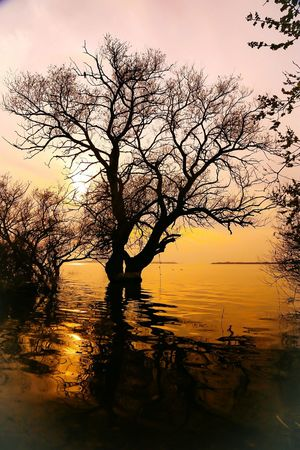 Sunset Reflection Nature Dramatic Sky Water Beauty In Nature Sky No People Tree Tranquility Sun Outdoors Sea Scenics