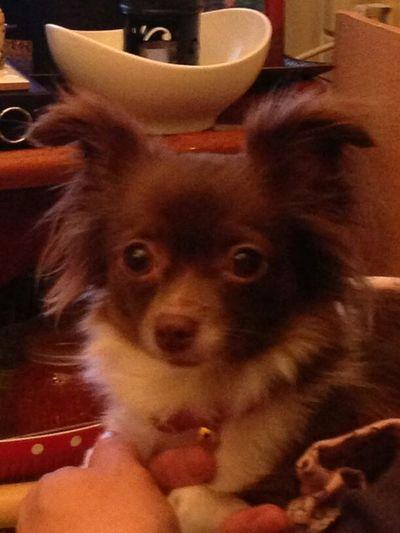 my little moira! love her Dog