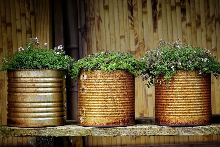 Herbs Herb Thyme Tin Can Metallic Metal Metal Pot Rustic Rusty Rusty Metal Plant Plants Beautiful Nature Plants And Flowers EyeEm Nature Lover Eye4photography  Flowerporn Flowers Planting Pot Potted Plant