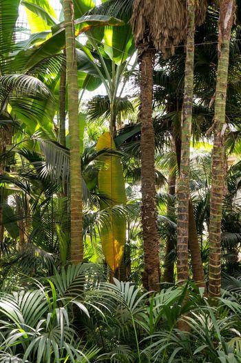 Serres De Laeken (Brussels). Greenhouse Brussels Bruxelles Belgium Brussel Nature Nature_collection Leaves