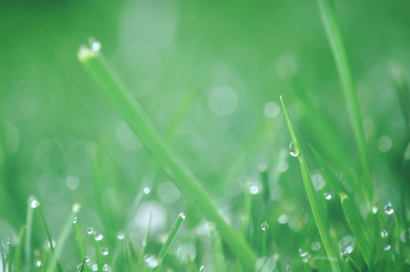 Morgennebel Grass Drop Green Color Freshness Backgrounds RainDrop Defocused Macro Photography Idyllic Scenics Droplets Collection Tautropfen Germany Photos Official EyeEm © EyeEm Germany The Week On EyeEem GERMANY🇩🇪DEUTSCHERLAND@ EyeEm Best Shots