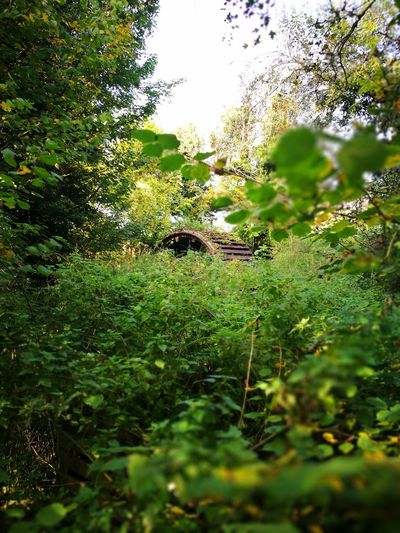 Old Watermill  Restoration Nature Outdoors Tree Beauty In Nature Green Color Growth No People Day Grass Plant Close-up Water Freshness Fragility Animal Themes