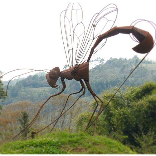 Betosalvestrini Mérida Ula Jardinbotanico Nature Quickphoto Abugslife Bugs Sculpture Samsung Wb2100 Rcnocrop