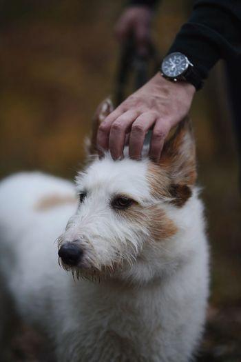 Dog Shepherd Portrait Animal Pet Bokeh Dreamy