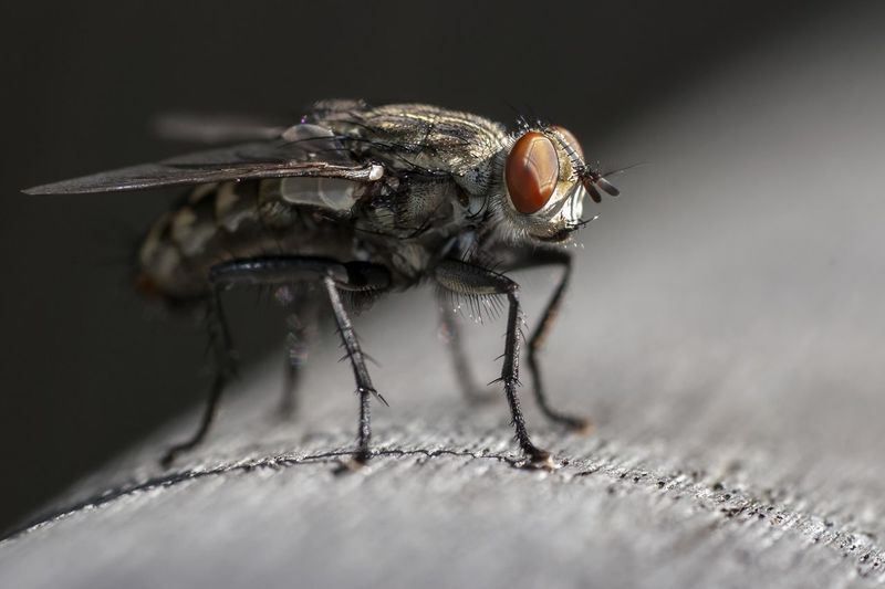 Close-Up Of Housefly On Railing