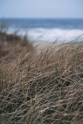 Beach Beauty In Nature Day Grass Growth Horizon Horizon Over Water Land Marram Grass Nature No People Outdoors Plant Reed Reed - Grass Family Scenics - Nature Sea Selective Focus Sky Timothy Grass Tranquil Scene Tranquility Water