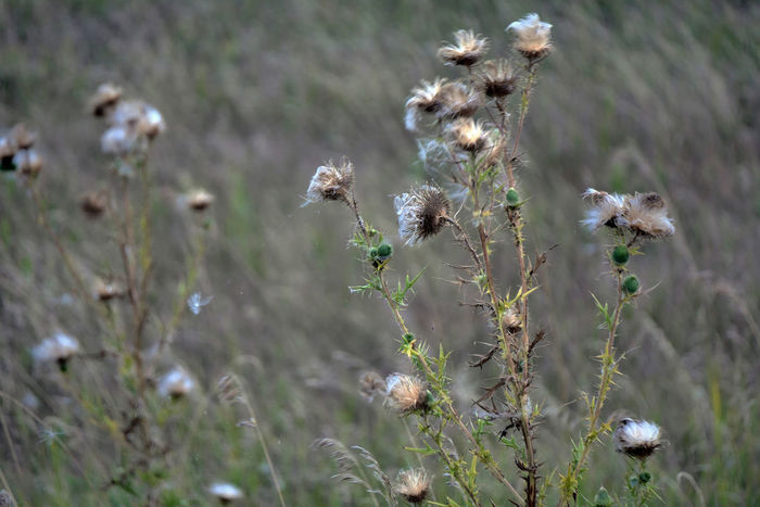 Native vegetation. Beauty In Nature Close-up Day Flower Fragility Growth Nature No People Outdoors Plant Plant Themes