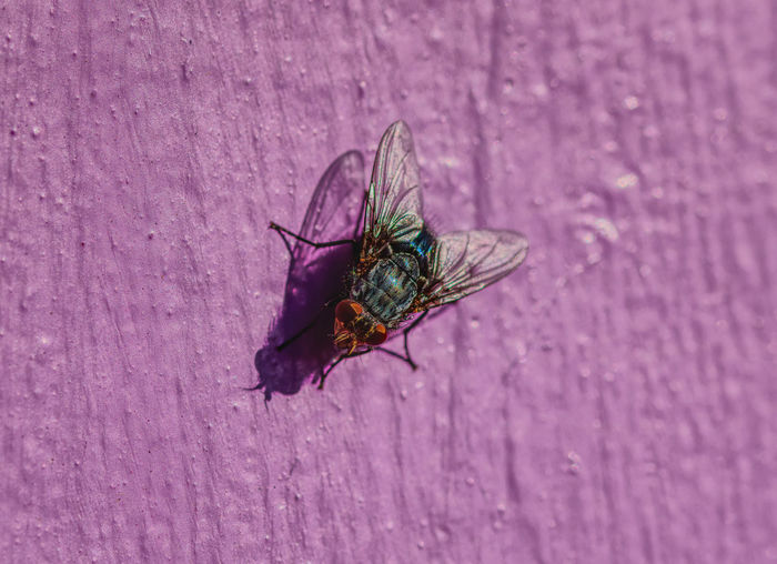 Close-up of fly on flower against wall