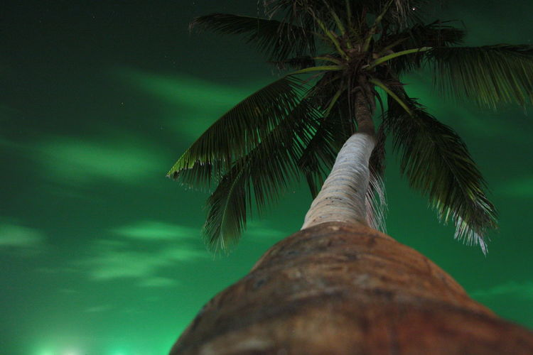 Beauty In Nature Coconut Palm Tree Directly Below Green Color Growth Land Leaf Low Angle View Nature No People Outdoors Palm Leaf Palm Tree Plant Plant Part Sky Tranquility Tree Tree Trunk Tropical Climate Tropical Tree Trunk HUAWEI Photo Award: After Dark