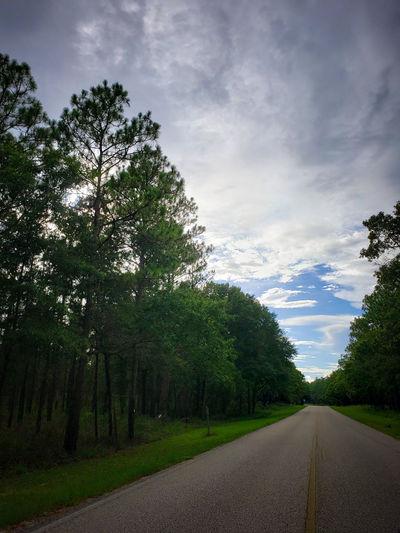 Tree Road Tree
