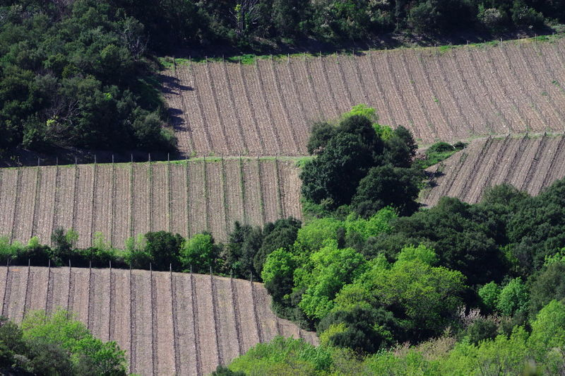 Agriculture Fields Growth No People Puzzle Mode Trees And Nature Wineyards
