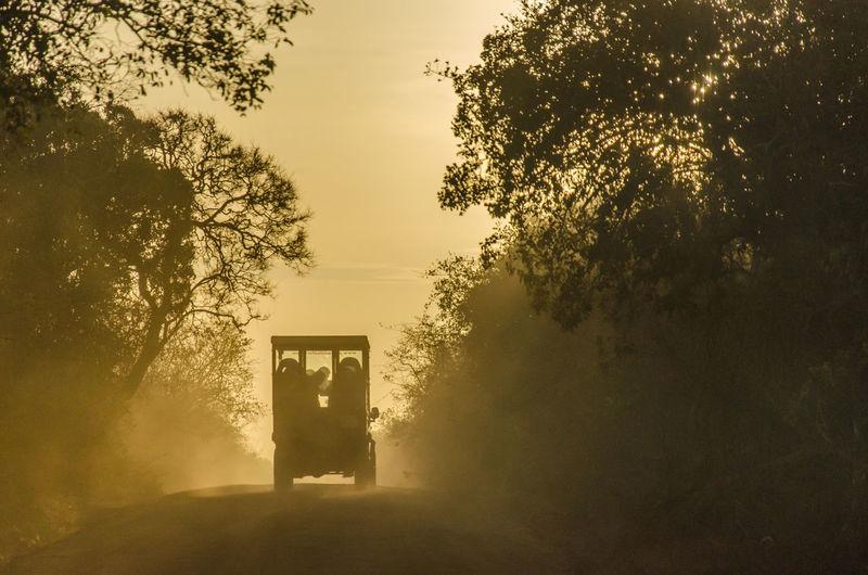 Vehicle on road amidst trees against sky