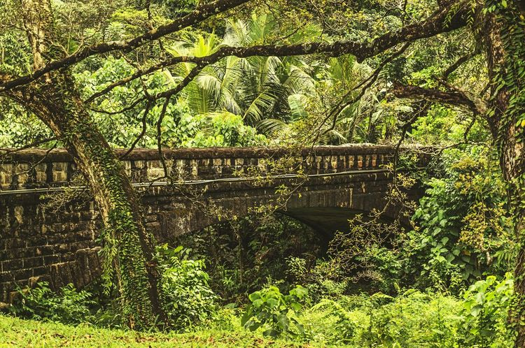 Jungle Traveling SriLanka Green Nature Naturelovers Palm Trees Nature_collection Bridge