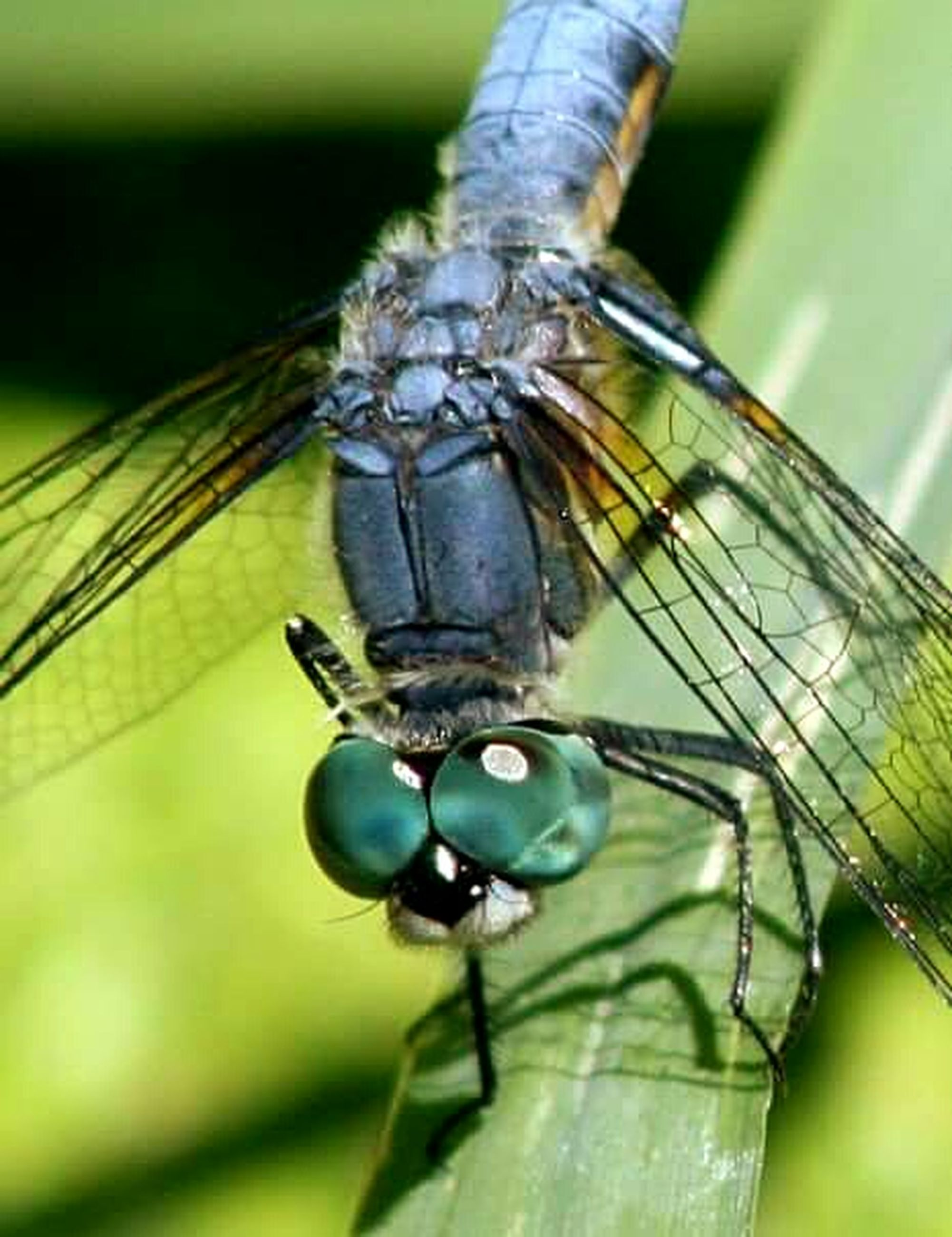 insect, one animal, animal themes, animals in the wild, wildlife, dragonfly, close-up, focus on foreground, animal wing, selective focus, spider, green color, day, zoology, nature, outdoors, animal antenna, invertebrate, no people, animal body part