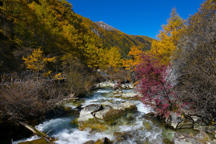 Colorful waterfall in autumn forest at Yading nature reserve, China Water Tree Autumn Plant Nature Beauty In Nature Scenics - Nature River Forest Sky Change No People Tranquility Day Stream - Flowing Water Flowing Water Land Tranquil Scene Rock Flowing Outdoors Autumn Collection