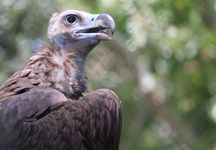 Close-up of eagle
