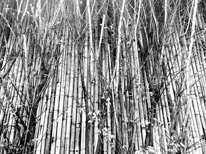Wall Bamboo Wall Nature Wall Tree Wall Wall And Nature Wall And Tree Black And White Black And White Photography Wall Photographyใน Dusit, Thailand