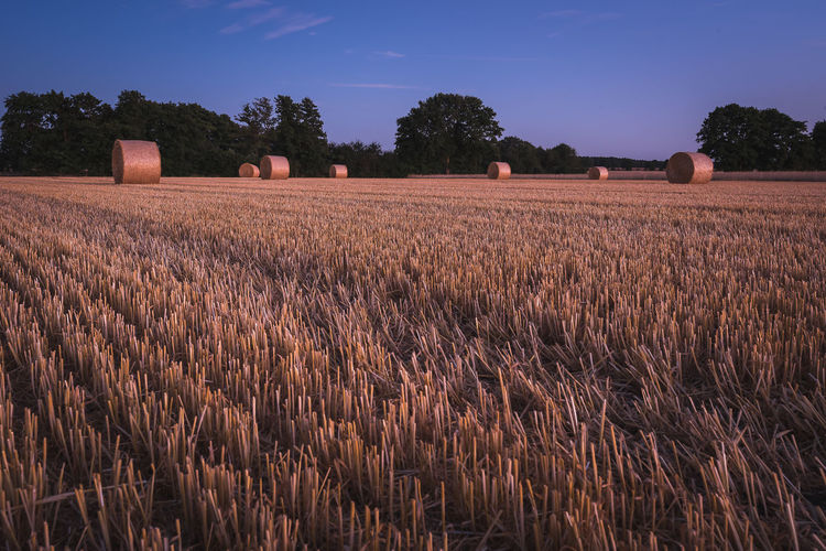 Straw bales during blue hour in evening Landscape Land Field Rural Scene Agriculture Plant Sky Beauty In Nature Tranquil Scene Environment Tranquility Tree Scenics - Nature Farm Nature No People Growth Crop  Day Harvesting Outdoors Harvest Time Straw Bales Field Grainfields