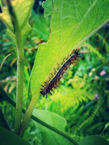 Gusano Animals Beautiful Nature Nature Photography Macro Photography Colombia Worm Insect Photography