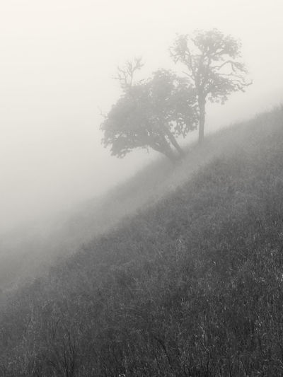 Foggy day on Russian Ridge Preserve. Bay Area Black And White Landscape Silhouette Beauty In Nature Black And White Day Environment Field Fog Grass Growth Hazy  Hill Isolated Land Landscape Mist Nature No People Non-urban Scene Outdoors Plant Scenics - Nature Sky Tranquil Scene Tranquility Tree