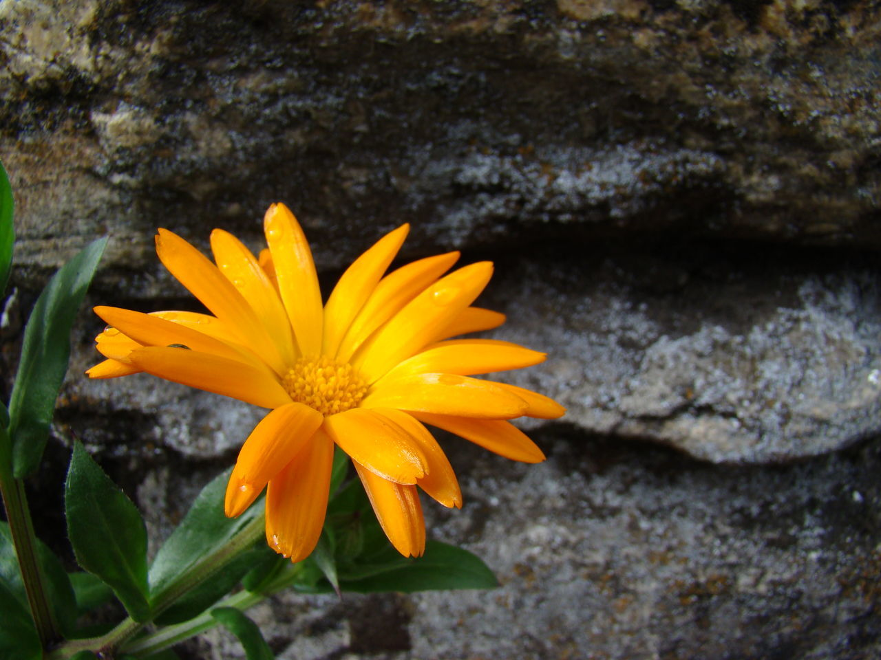 flower, petal, yellow, fragility, flower head, beauty in nature, nature, freshness, growth, blooming, plant, no people, outdoors, pollen, close-up, day, gazania