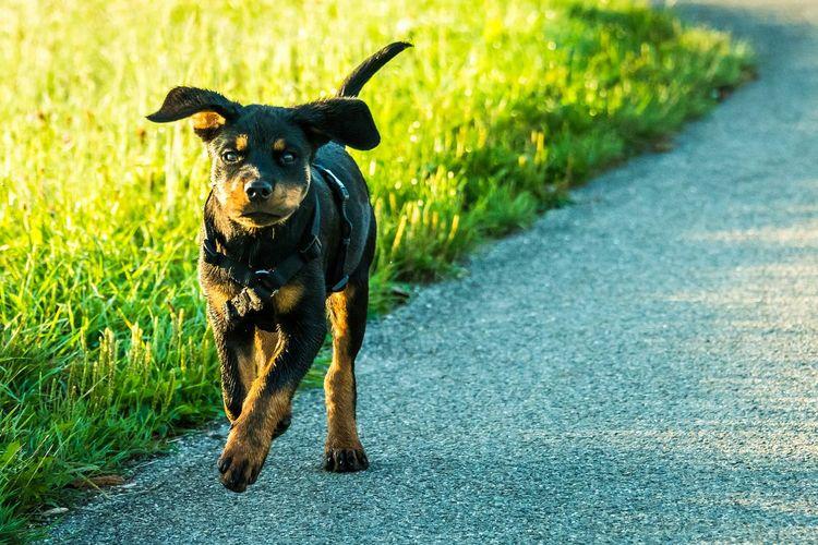Puppy Dogs Animals Enjoying Life Eye4photography  EyeEm Gallery Open Edit