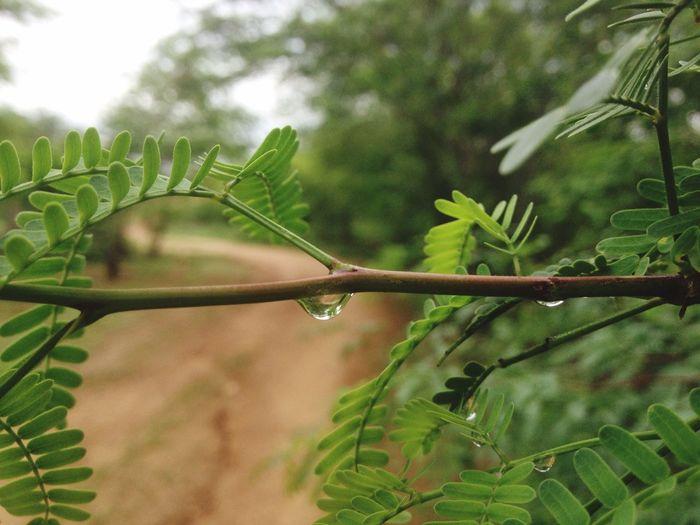 por onde a chuva passou Hello World Rain Rainy Days Nature